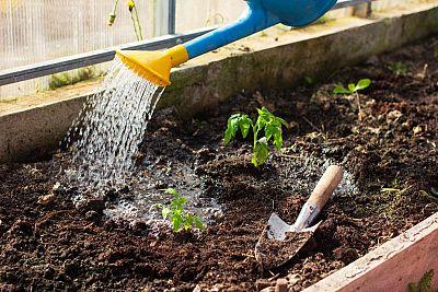 6 dôvodov, prečo si kúpiť drevené vyvýšené záhony a aké sú výhody i nevýhody pestovania zeleniny, byliniek a kvetov vo vysokom záhone