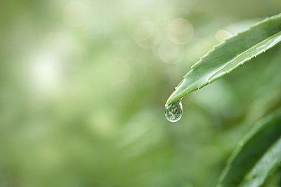 Chcete vlastnú dažďovú záhradu? Založte si ju krok za krokom