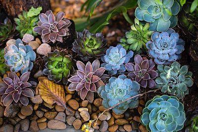 Túžite po kúsku hôr u vás doma? 7 krokov, ako si vytvoriť vlastnú záhradnú skalku
